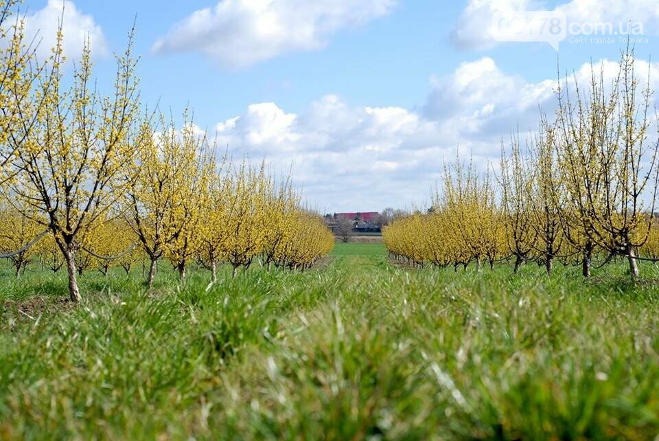 Під Токмаком розквітнув незвичайний сад – найбільший в Європі, фото-1